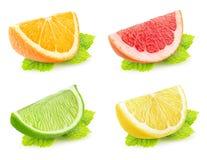 Rebanadas aisladas de la fruta cítrica con la menta Fotos de archivo