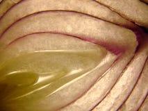 Rebanadas de la cebolla Fotografía de archivo libre de regalías