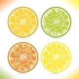Rebanadas de la fruta cítrica. Fotos de archivo