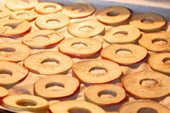 Rebanadas de sequía de manzanas en casa Fotos de archivo