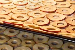 Rebanadas de sequía de manzanas en casa Foto de archivo