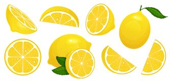 Rebanadas del limón Fruta cítrica fresca, medios limones cortados y sistema aislado limón tajado del ejemplo del vector de la his libre illustration