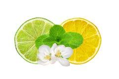 Rebanadas del limón y de la cal e hierba de la menta aislada en blanco Foto de archivo libre de regalías