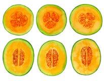 Rebanadas del melón ilustración del vector