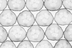 Rebanadas del pepino Fondo blanco y negro Modelo Fondo del alimento Macro Foto de archivo libre de regalías