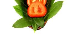 rebanadas del tomate Fotos de archivo libres de regalías