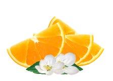 Rebanadas frescas y flores anaranjadas aisladas en blanco Imágenes de archivo libres de regalías