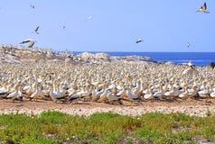 Rebanho da gaivota no console de pássaro Imagens de Stock