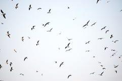 Rebanho da gaivota no vôo Foto de Stock Royalty Free