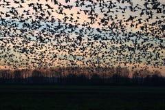 Rebanho da silhueta dos pássaros no por do sol imagens de stock royalty free