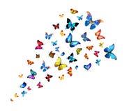 Rebanho das borboletas Imagem de Stock Royalty Free