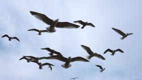 Rebanho das gaivotas foto de stock royalty free