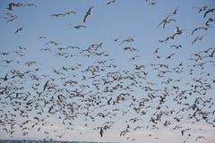 Rebanho das gaivotas imagens de stock royalty free