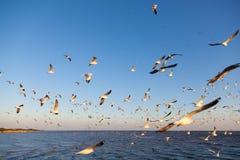 Rebanho das gaivotas Fotografia de Stock