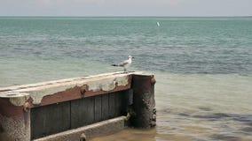 Rebanho das gaivotas vídeos de arquivo