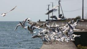 Rebanho das gaivotas video estoque