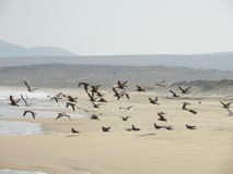 Rebanho das gaivotas que tomam o voo fotos de stock