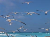 Rebanho das gaivotas sobre o carribean imagens de stock royalty free