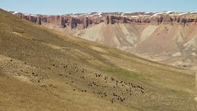 Rebanho de animais pretos no deserto filme