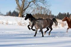 Rebanho de cavalos running Foto de Stock
