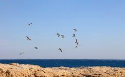 Rebanho de muitas gaivota de mar que voam pairar no céu azul foto de stock royalty free