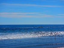 Rebanho de pássaros do oceano em voo fotos de stock