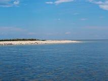 Rebanho de pássaros de mar na praia Fotos de Stock Royalty Free