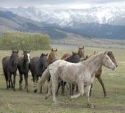 Rebanho do cavalo Fotos de Stock Royalty Free