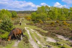 Rebanho do cavalo que pasta no campo Fotografia de Stock Royalty Free