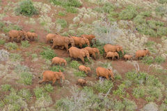 Rebanho do elefante Fotos de Stock Royalty Free