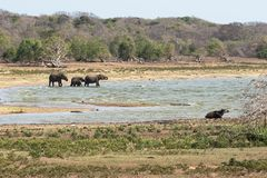 Rebanho do elefante ao lago Imagem de Stock Royalty Free