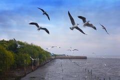 Rebanho do voo das gaivotas fotografia de stock royalty free