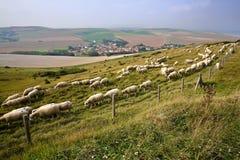 Rebanho dos carneiros com vila de Escalles e campos circunvizinhos coloridos no fundo, tampão Blanc Nez, ` Opale da costa d, Pas  Foto de Stock