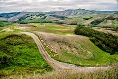 Rebanho dos carneiros em valeys de Tuscan Imagens de Stock