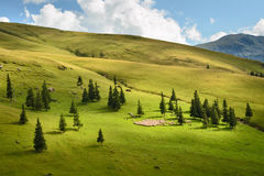 Rebanho dos carneiros no pasto alpino Foto de Stock