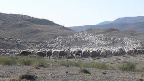Rebanho dos carneiros filme