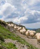 Rebanho dos carneiros olhados pelo cão do shepperd, nas montanhas fotografia de stock