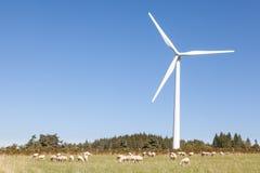 Rebanho dos carneiros que pastam abaixo de uma turbina eólica em um agricullture Imagens de Stock