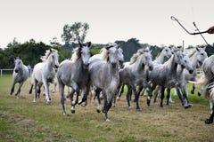 Rebanho dos cavalos Fotografia de Stock Royalty Free