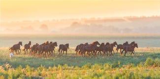 Rebanho dos cavalos corridos no por do sol fotos de stock