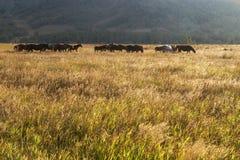 Rebanho dos cavalos em um pasto Imagens de Stock Royalty Free