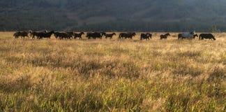 Rebanho dos cavalos em um pasto Fotografia de Stock