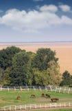 Rebanho dos cavalos na exploração agrícola Fotografia de Stock