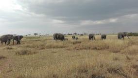 Rebanho dos elefantes em Serengeti NP Foto de Stock Royalty Free