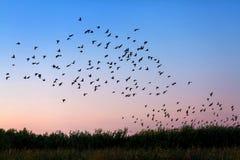 Rebanho dos pássaros imagem de stock royalty free