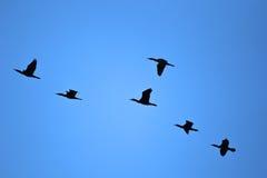 Rebanho dos pássaros Imagens de Stock Royalty Free