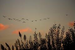 Rebanho dos pássaros Imagem de Stock