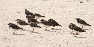 Rebanho dos pássaros Imagens de Stock