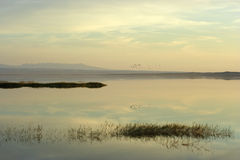 Rebanho dos pássaros acima do lago no por do sol imagens de stock royalty free