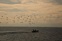 Rebanho dos pássaros e do barco do pescador Fotos de Stock